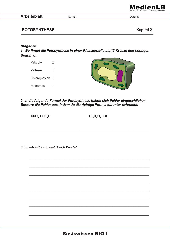 Fotosynthese – Unterrichtsmaterial im Fach Biologie   Biologie ...