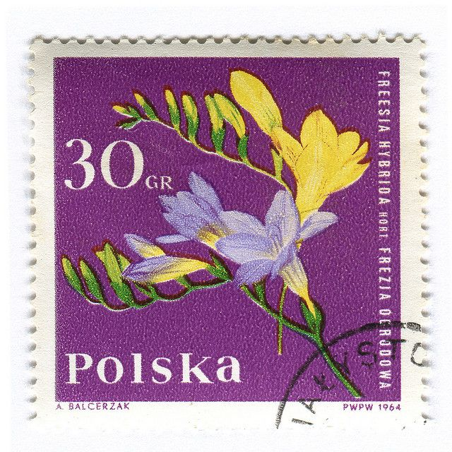 Poland Postage Stamp: Freesia | Flickr - Photo Sharing!