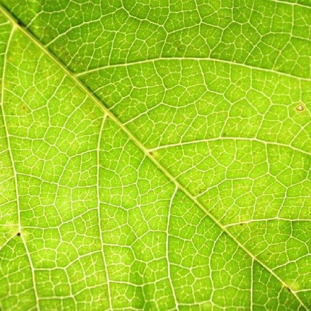 بعد الكتاب سيكون هدفنا في اﻷسبوع الثالث هي أوراق اﻷشجار الشرط اﻷساسي هو ظهور ورقة أوراق شجرة بشكل واضح وتكون هي العنصر اﻷساسي في الص Plant Leaves Photo Plants