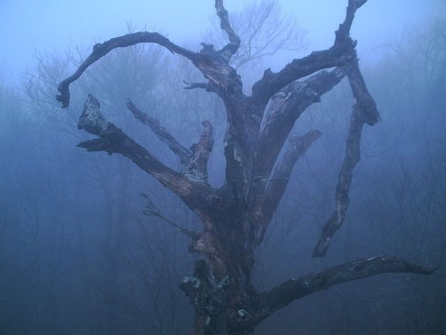 Twisted Branches of Dead Tree Make an Eerie Scene
