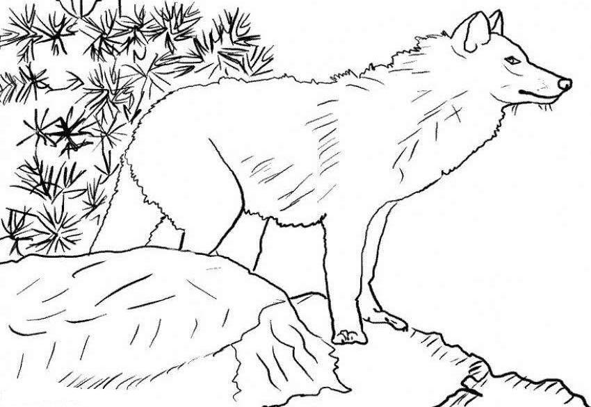 Freewolfcoloringpages coloring pages for kids coloring pages