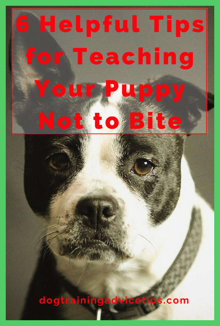 Prepared To Stop Pup Biting Quick These 10 Pointers Will Help