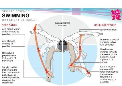 Image result for how to swim freestyle diagram data visualization image result for how to swim freestyle diagram ccuart Image collections