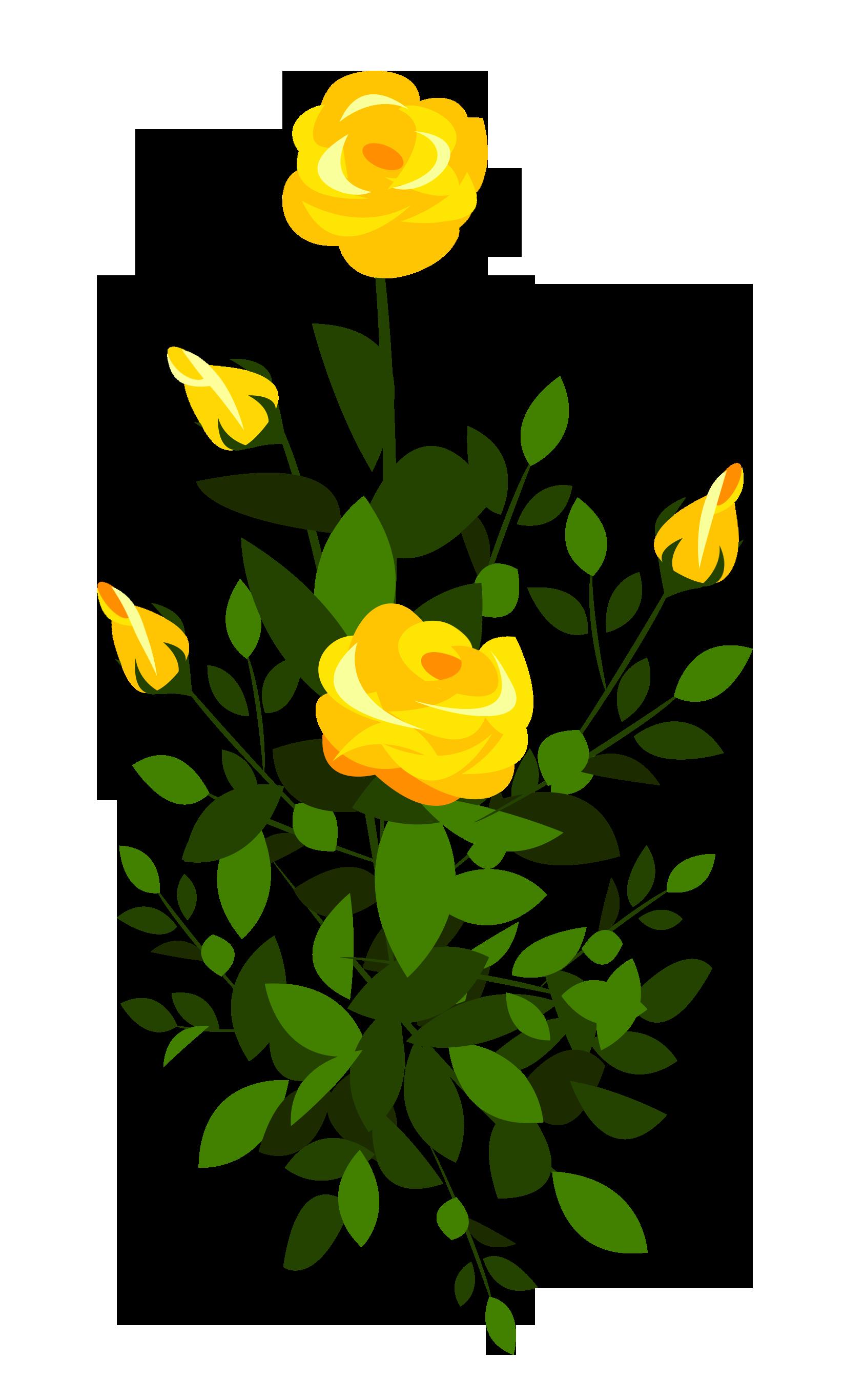 Pin de K Anbuk em Flowers