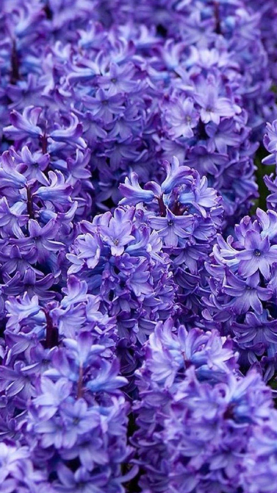 Purple Flower Wallpaper For Iphone Mywallpapers Site Purple Flowers Wallpaper Flower Iphone Wallpaper Purple Flowers