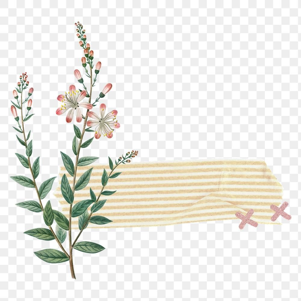 Tartflower With A Yellow Striped Washi Tape Design Element Transparent Png Premium Image Poster Background Design Flower Drawing Flower Background Wallpaper