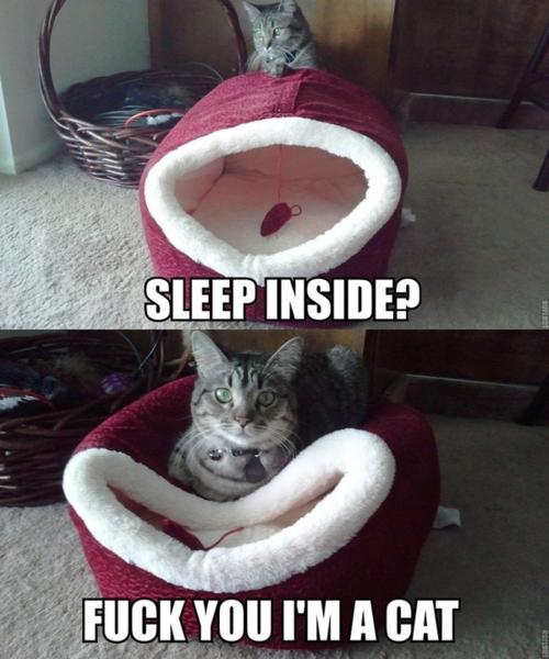 sleep inside?