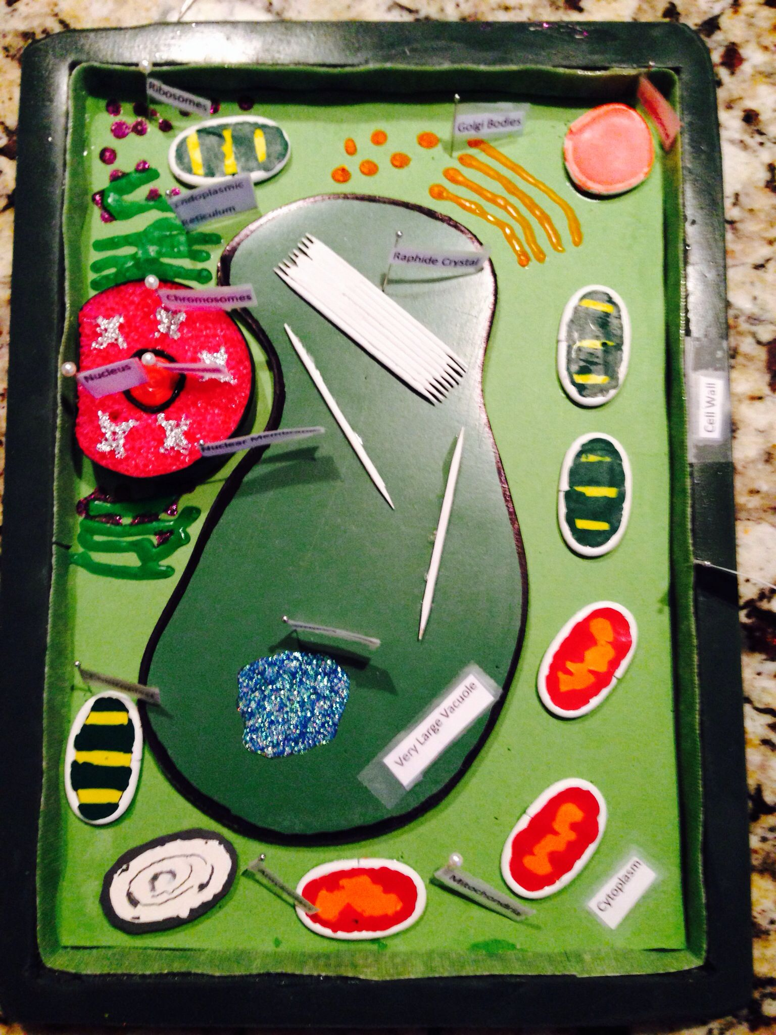Science Project 7th Grade 3 D Plant Cell Model