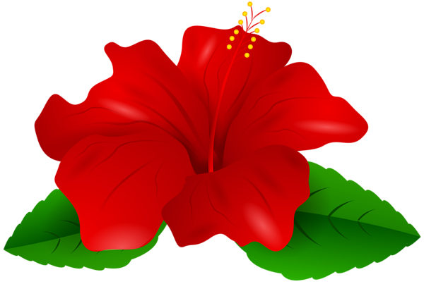 Red Hibiscus Transparent Png Clip Art Beautiful Flowers Images Hibiscus Flowers