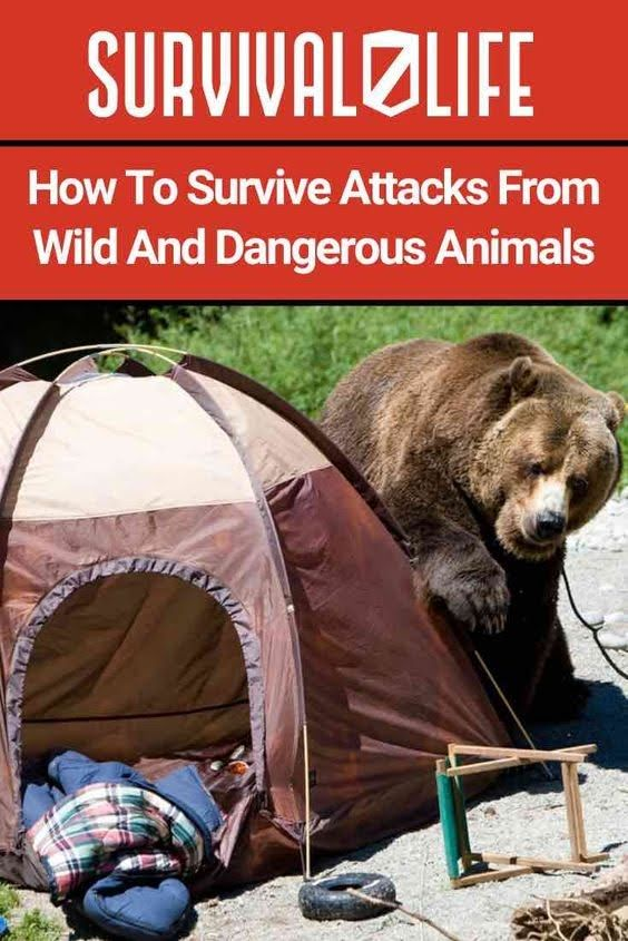 How to Survive Attacks From Wild and Dangerous Animals