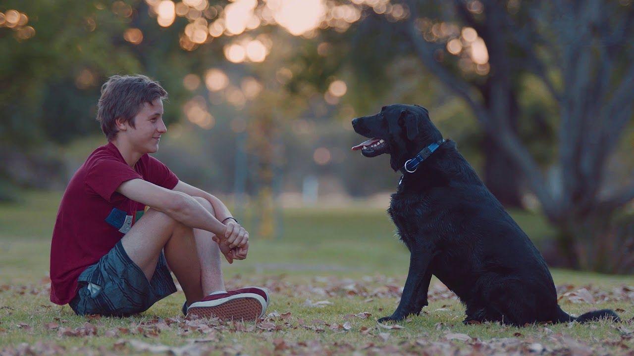 Adopt your special someone at RSPCA Victoria https//cstu