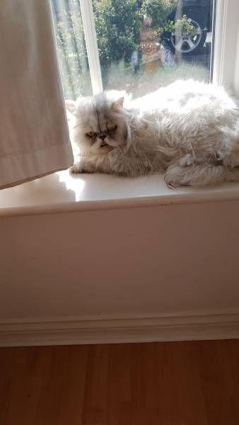 LOST CAT: 29/05/2017 - Crawley, West Sussex, England, United Kingdom. Ref#: L30627 - #CritterAlert #LostPet #LostCat #MissingCat
