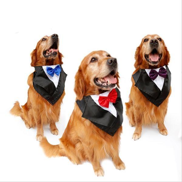 Garnitur Muszka Ubranko Dla Duzego Psa 5834774543 Oficjalne Archiwum Allegro Large Dog Costumes Dog Halloween Costumes Cute Dog Costumes