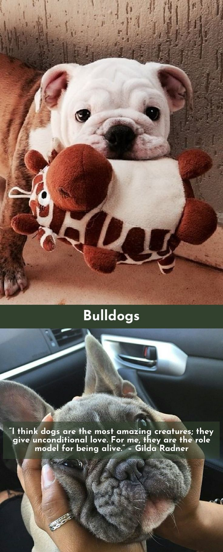 Look at the webpage to see more on bulldogs please click