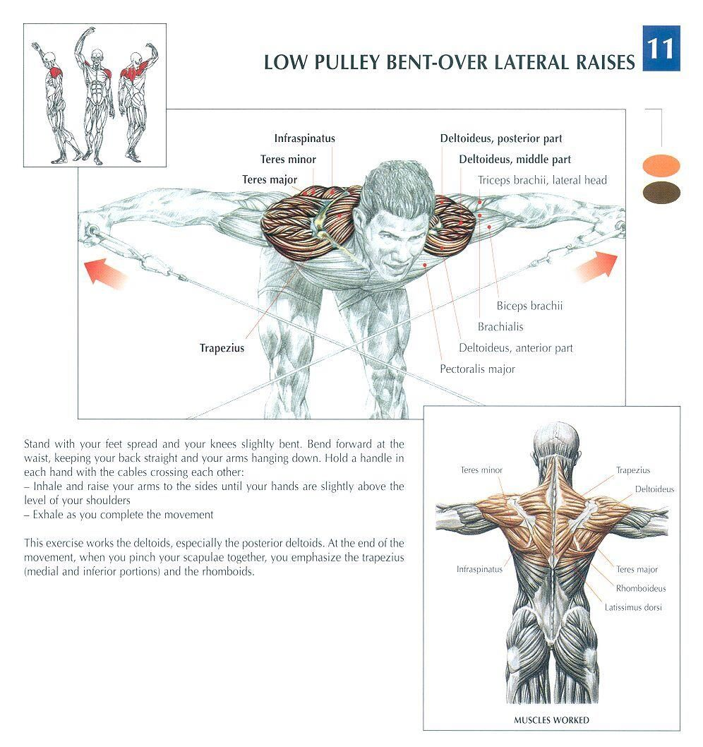 medium resolution of low pulley bent over lateral raises health fitness exercises diagrams body muscles gym bodybuilding shoulders