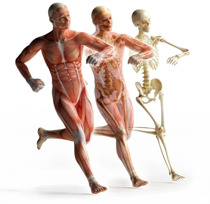 As research into the function of connective tissue (myofascial ...