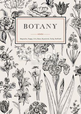 Botany. Vintage floral card. Royalty Free Stock Vector Art Illustration