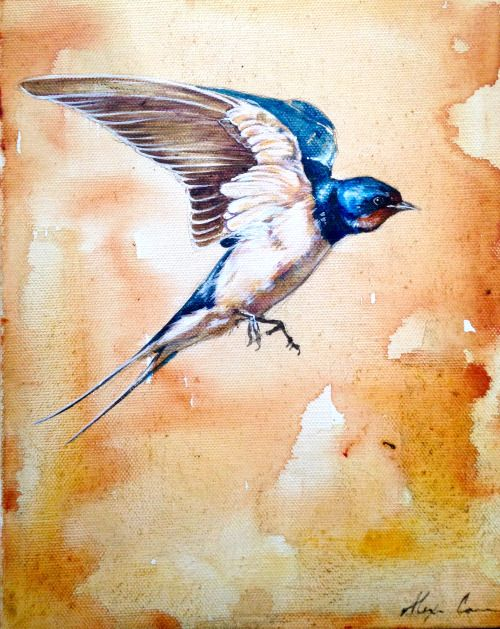 Barn Swallow 9x12″ acrylic on canvas