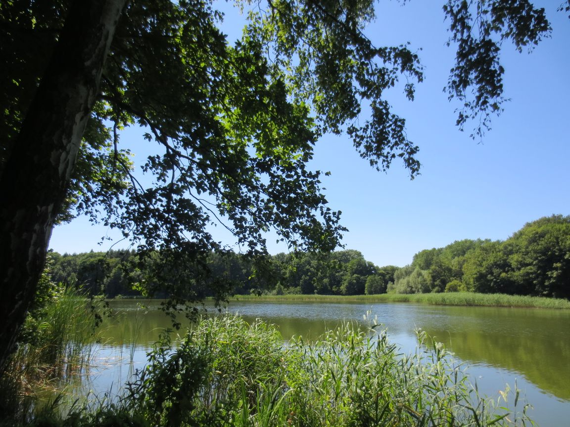 Vielbecker See, Grevesmühlen, Mecklenburg-Vorpommern, Deutschland, 2013-07-21