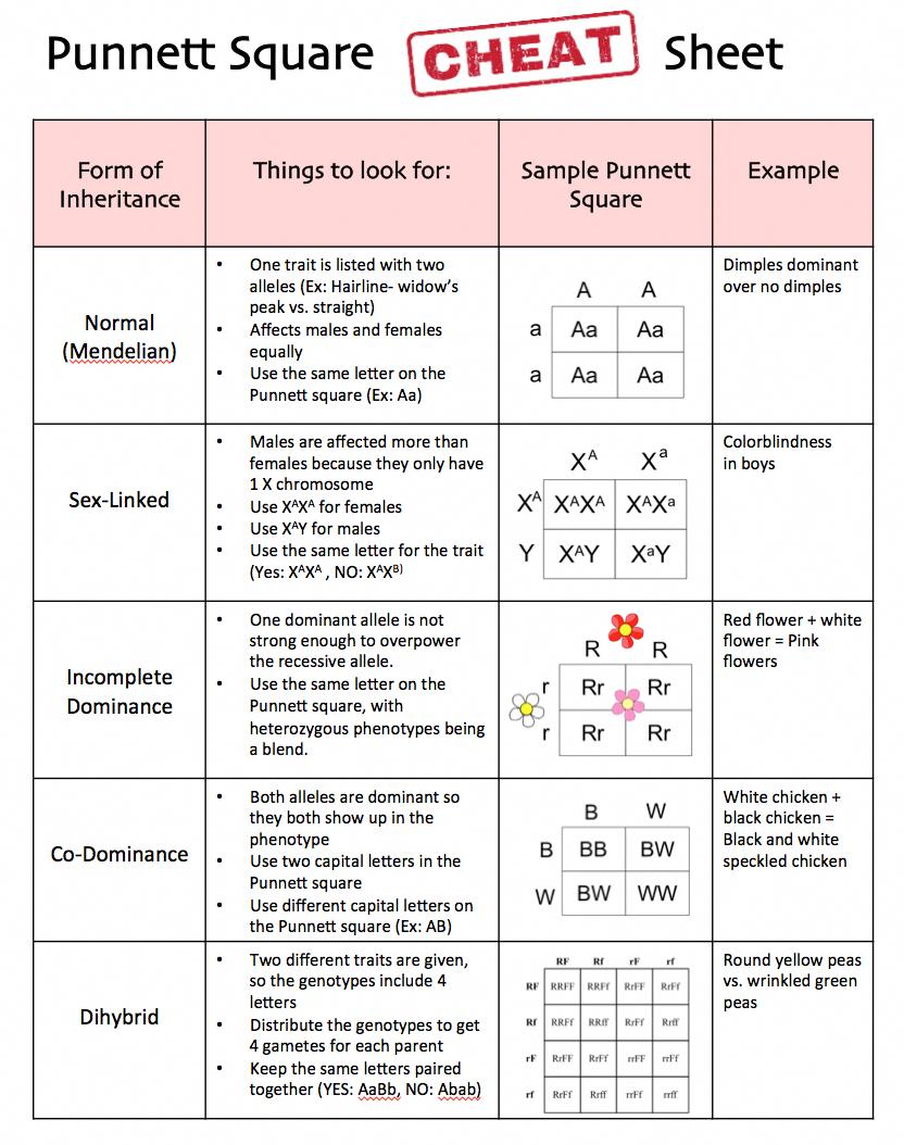 Punnett Square Cheat Sheet For Students Genetics Punnettsquare
