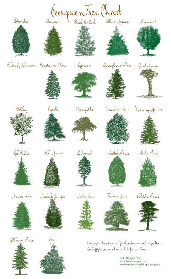 Rustic evergreen tree table number cards by for Garden designs the different types of gardens