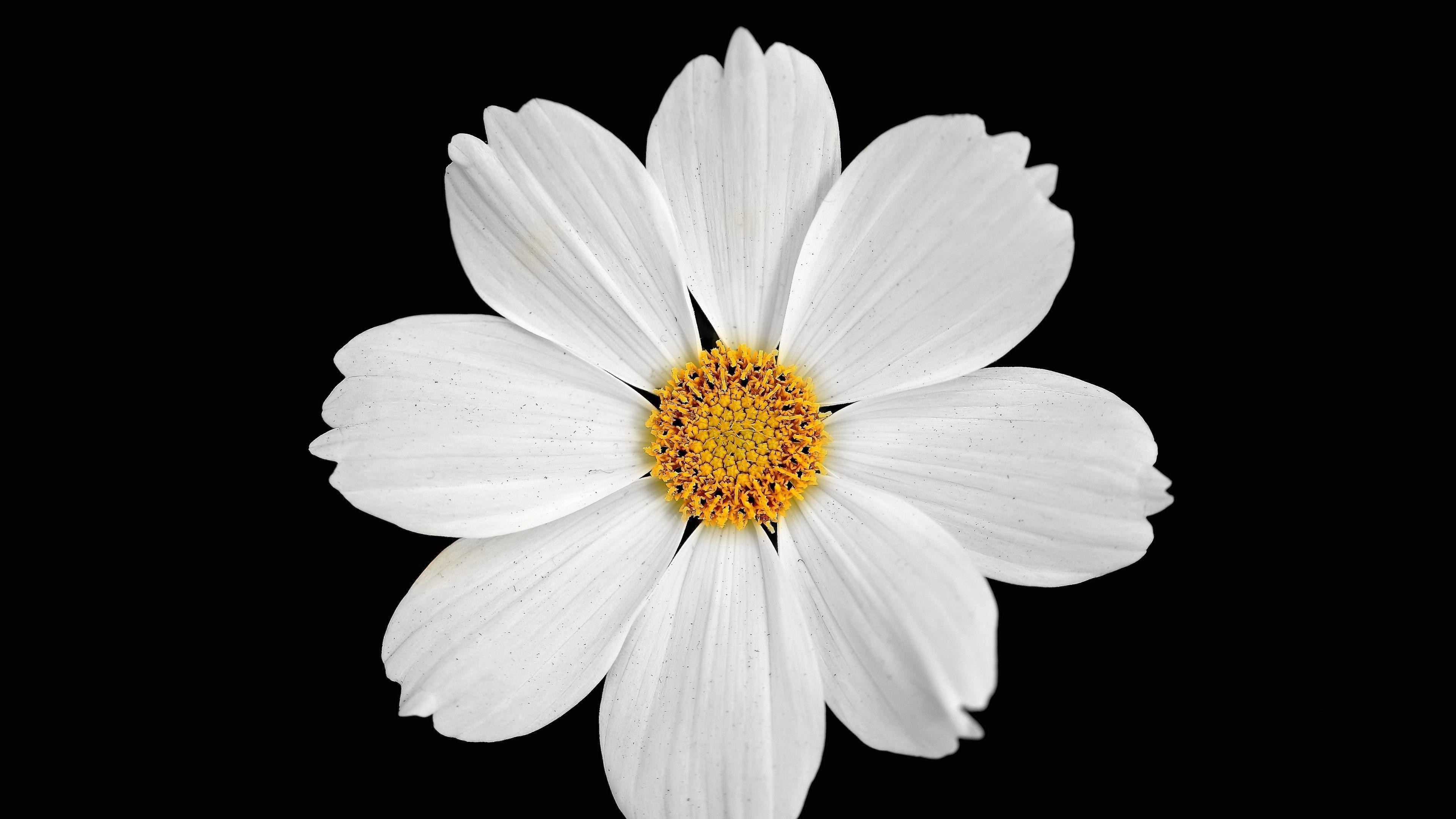 4k hd image download (3840x2160) Geometric nature, White