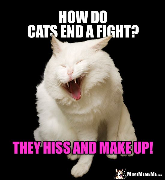 Laughing Cat Meme How Do Cats End A Fight They Hiss And Make Up Funny Cat Memes Cat Jokes Cats