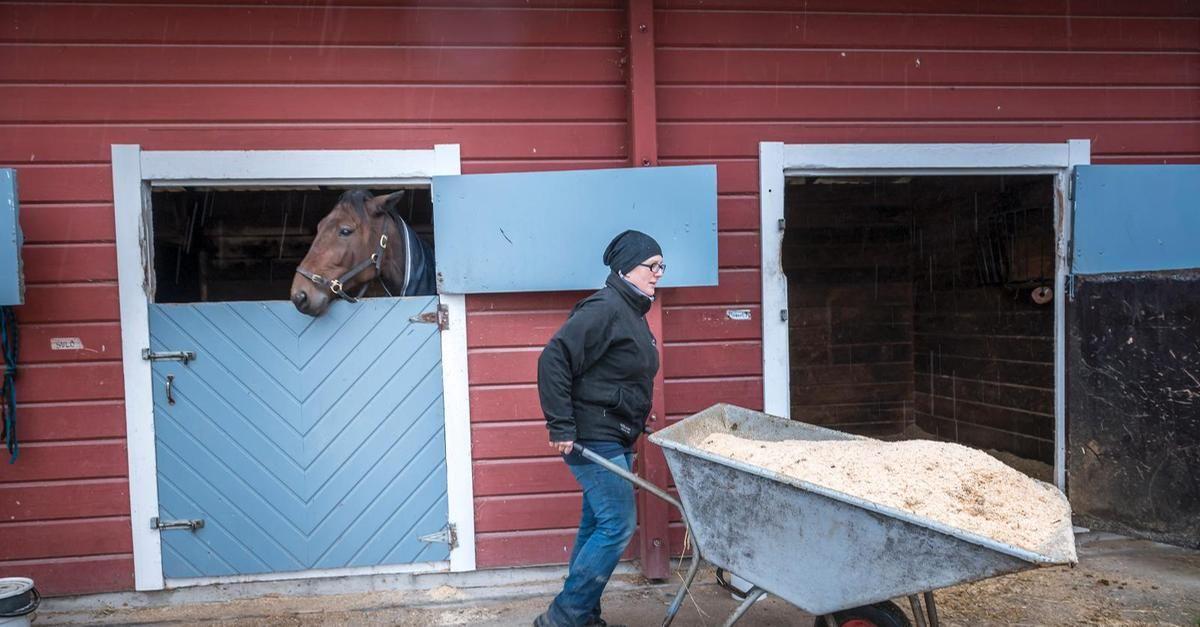 """""""Suomi sai tiistai-iltana läpi EU:ssa pitkään ajamansa aloitteen, joka helpottaa hevosenlannan polttoa. ... Jatkossa ei enää vaadita jätteenpolttolupaa, vaan hevosenlantaa voidaan polttaa myös muunkaltaisissa polttolaitoksissa."""""""