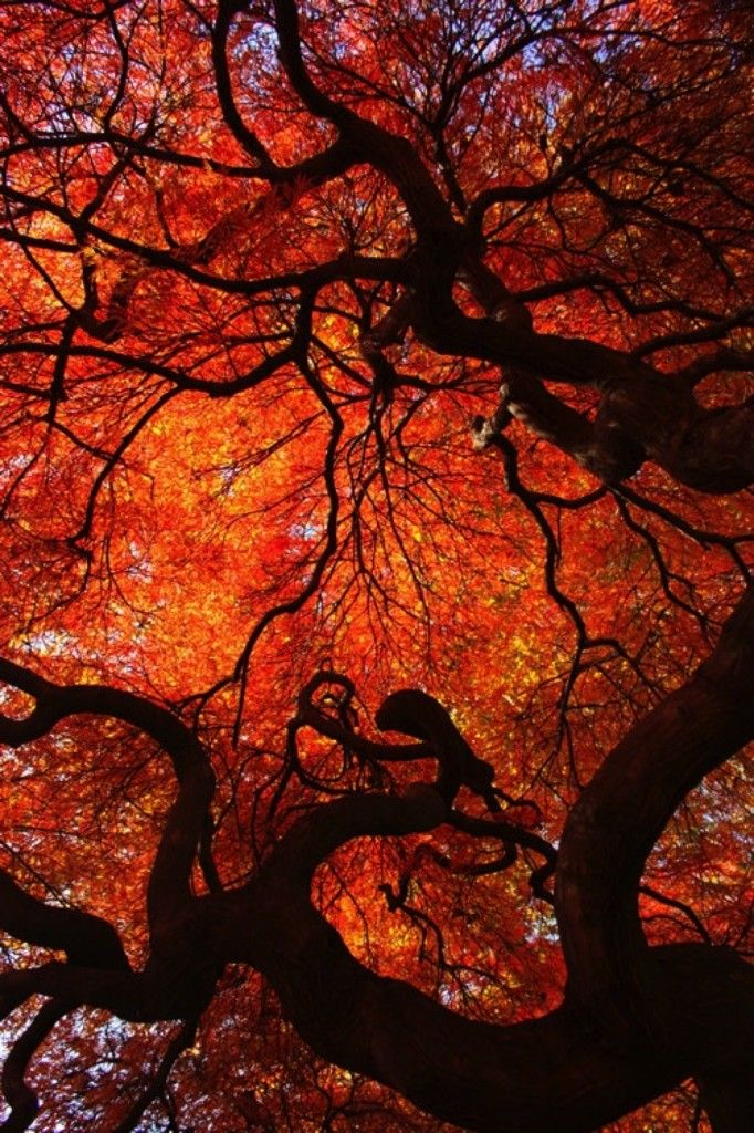 Fall Trees Fall Colors Trees Orange Leaves Beautiful Nature Beauty Amazing Inspiring Magical Trend Nature Photography Twisted Tree Beautiful Nature