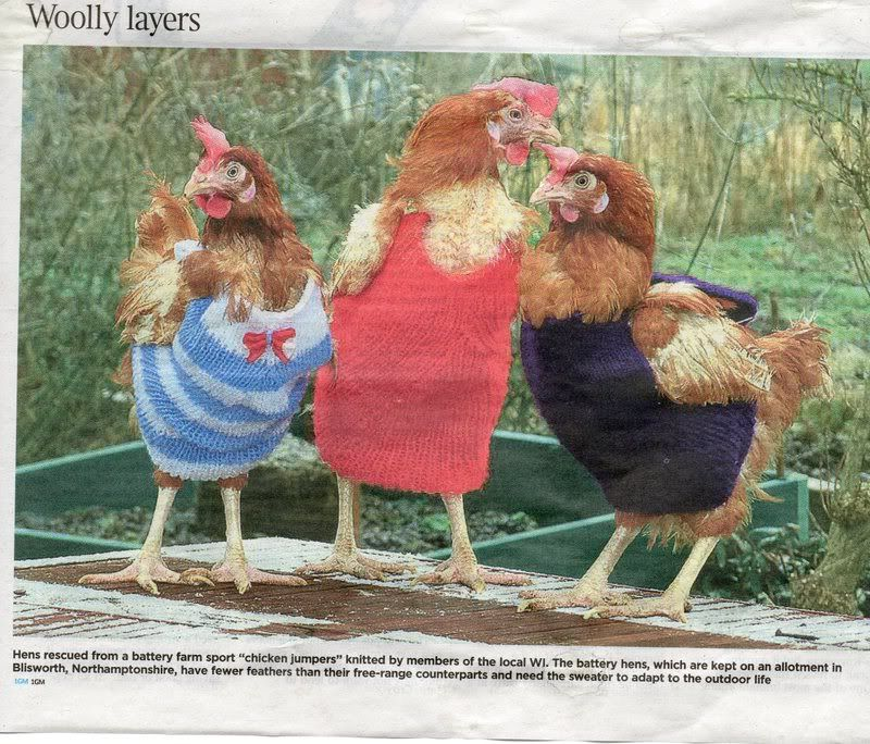 Knitted Chicken Jackets   Here\'s the Chux Tux knitting pattern ...