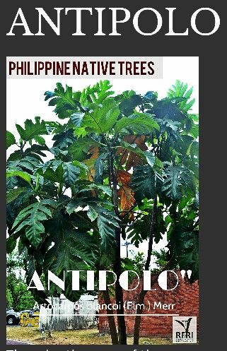 Antipolo Tree Lumber