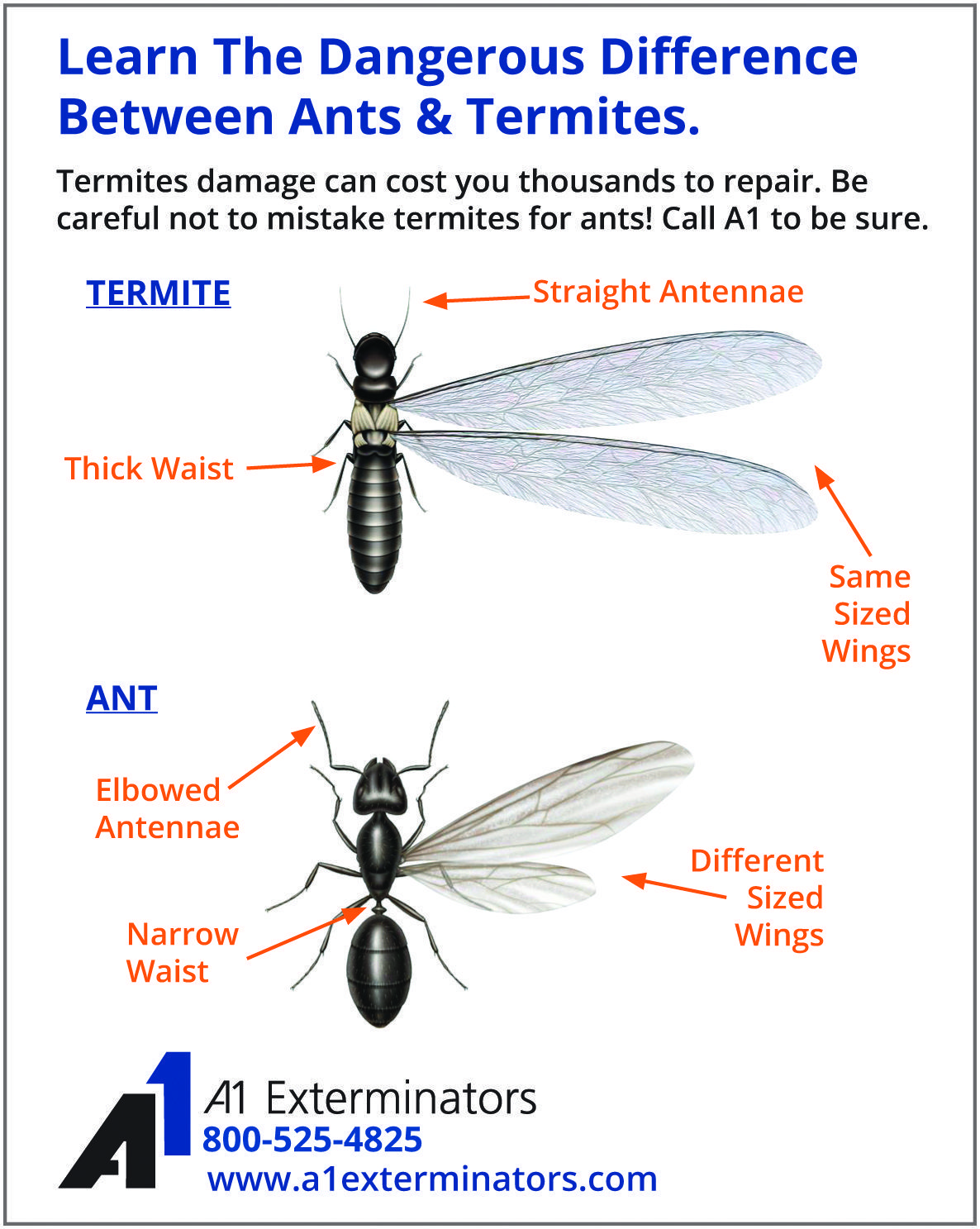 Pin by A1 Exterminators on Bug & Pest Control Tips