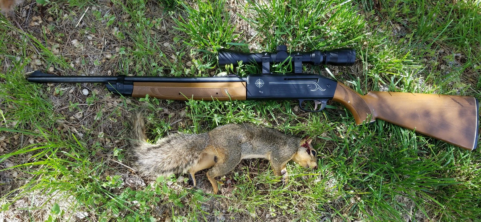 hight resolution of new scope on the crosman 2100 and first kill with new scope this one was taken with a bb at 10 yards