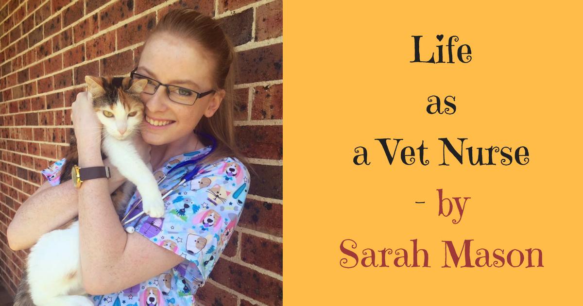 Life as a Vet Nurse by Sarah Mason I Love Veterinary