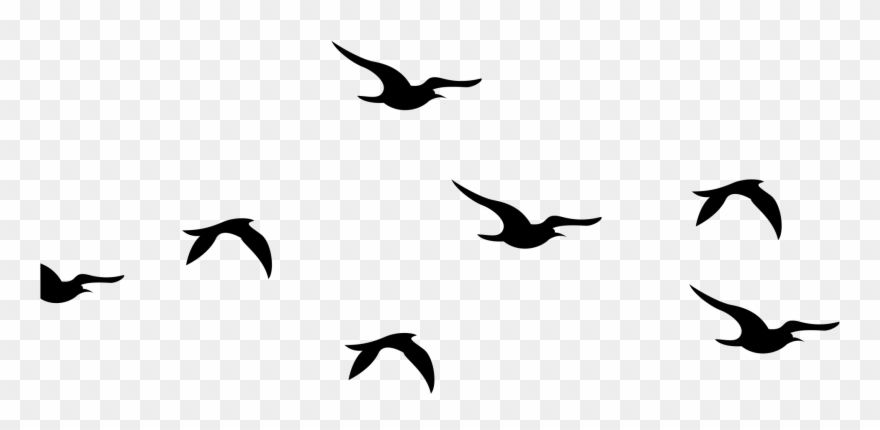 Bird Flock Png Silhouette Birds Clipart Black And White Transparent Png Flying Bird Silhouette Bird Silhouette Bird Silhouette Art