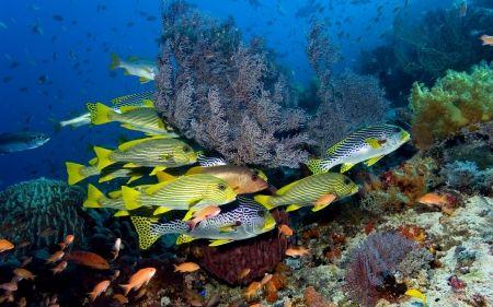 サンゴと熱帯魚 珊瑚礁 自然 高解像度で壁紙