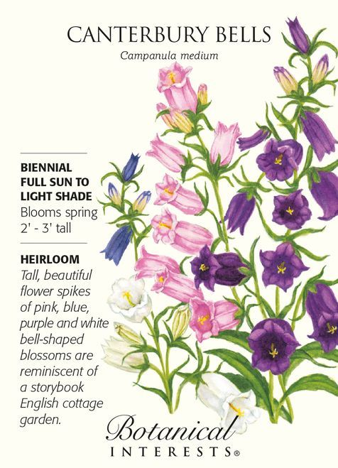 Biennial Blooms In Spring 2 3 Tall Sun Or Light Shade Flower Spikes With 1 2 Long Bell Shaped Flowers Of P Botanical Flowers Flower Care Flower Seeds