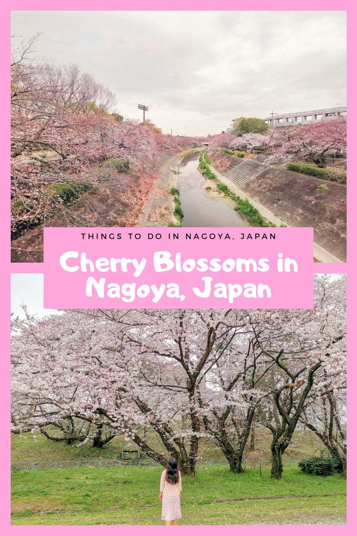 Cherry Blossoms In Nagoya Japan Travel Destinations Asia Japan Travel Guide Spring Travel Destinations