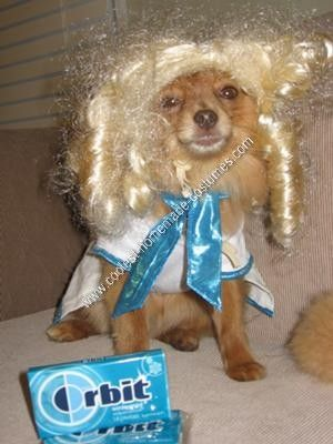 Nelly as the Orbit Gum Commercial Girl... This website is the Pinterest of pet halloween costumes