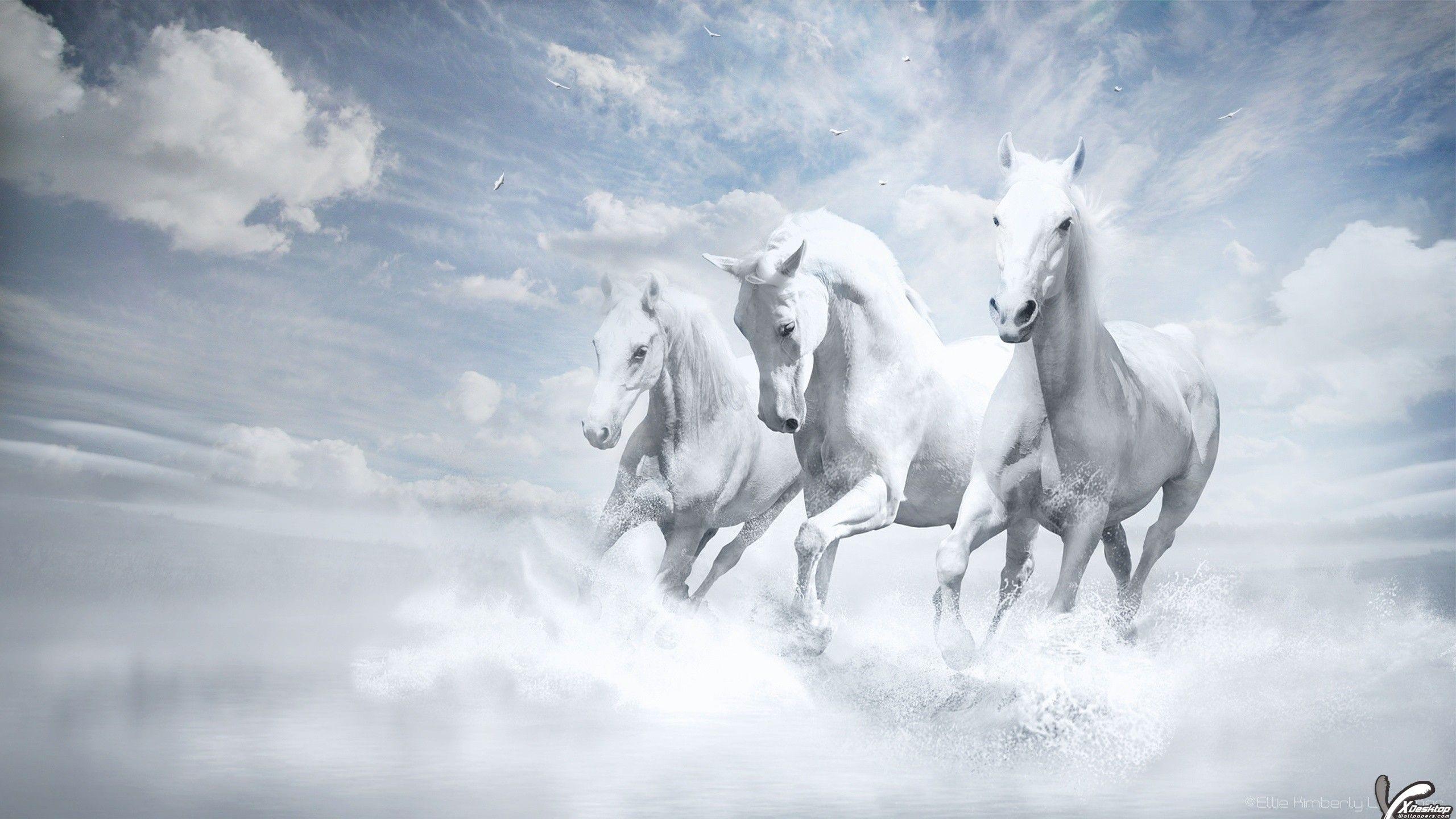 Beautiful three white horses running into water wallpapers white horses hd wallpapers white horses hd wallpapers for desktop mobile phones in hd widescreen high quality resolutions altavistaventures Gallery