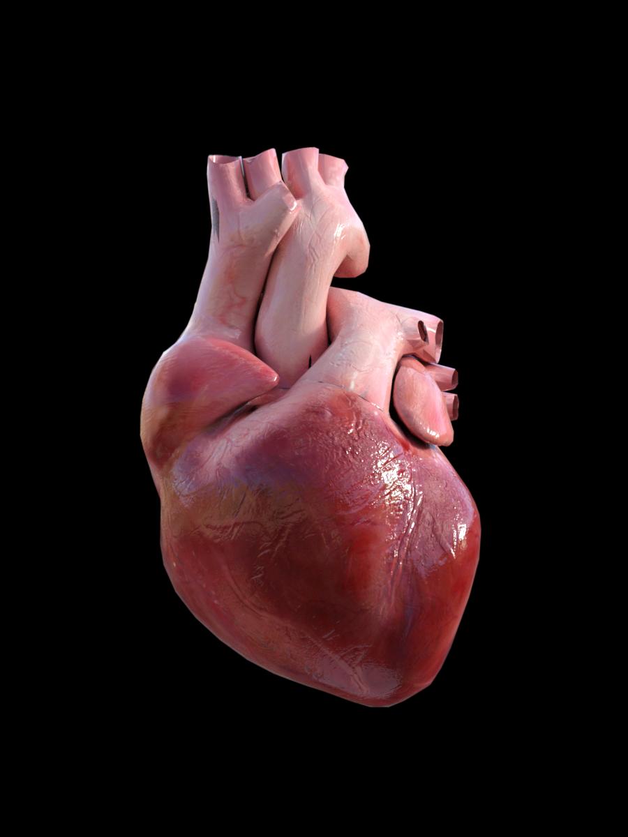 Pin by Jedi X on 3d Anatomy | Pinterest | 3d anatomy, Anatomy and ...