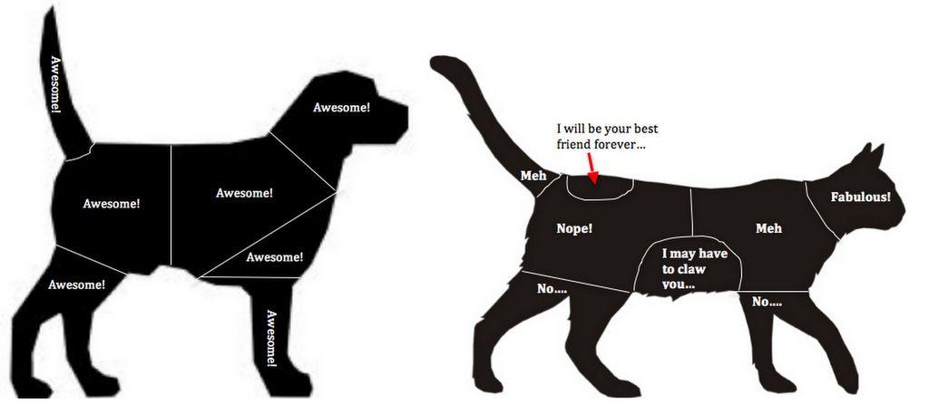 Combine Jpg 1024 458 Animal Hospital Pets Your Pet