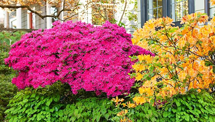 13 Great Shrubs For Spring Color Looking For A Plant To Add