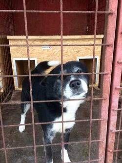 Tiere In Not Seite Hunde Aus Rumanien Hunde Aus Rumanien Tiere In Not Hunde In Not