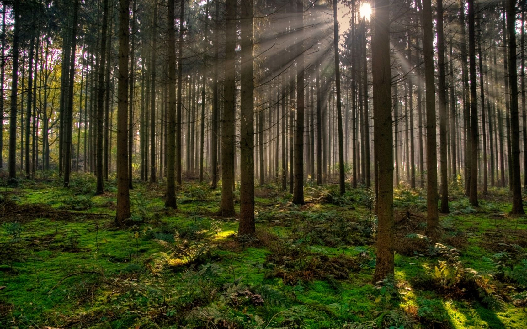 Morning Sunrays Wallpaper Landscape Nature Wallpapers In Jpg Tree Photography Tree Images Forest Photography Beautiful landscape tree plants sun rays