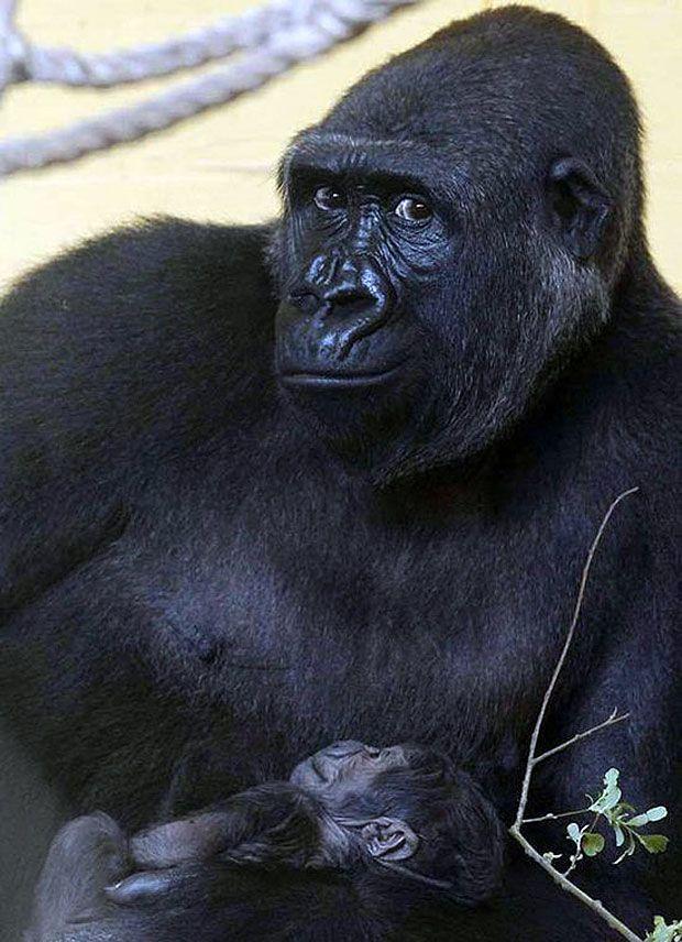30 Ridiculously Photogenic Animals - BlazePress