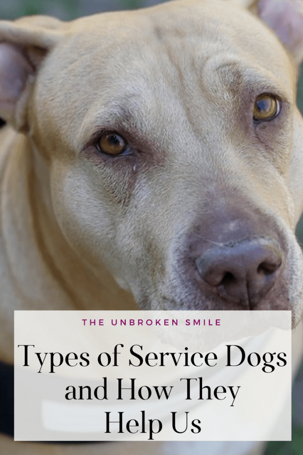 Types of Service Dogs and How They Help Us Service dogs