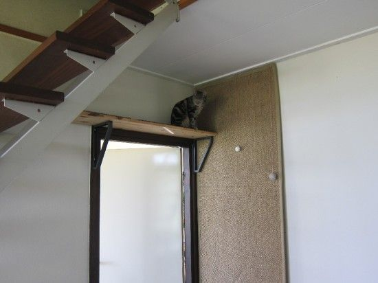 Climbing Wall For Cats Over Under Stairs Pinterest Cats Cat