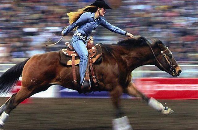 showgirlglitz:  Dat Blue Moon (Zumo Dat Cat x Savannah Blue Moon) 199815.3hh Bay AQHA Stallion