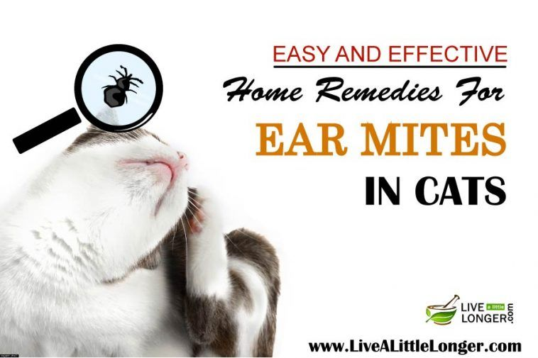 Home Remedies For Ear Mites In Cats Cat Ear Mites Dog Remedies Itchy Skin Remedy